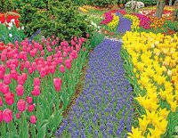 Busy Bloom Jigsaw Puzzle