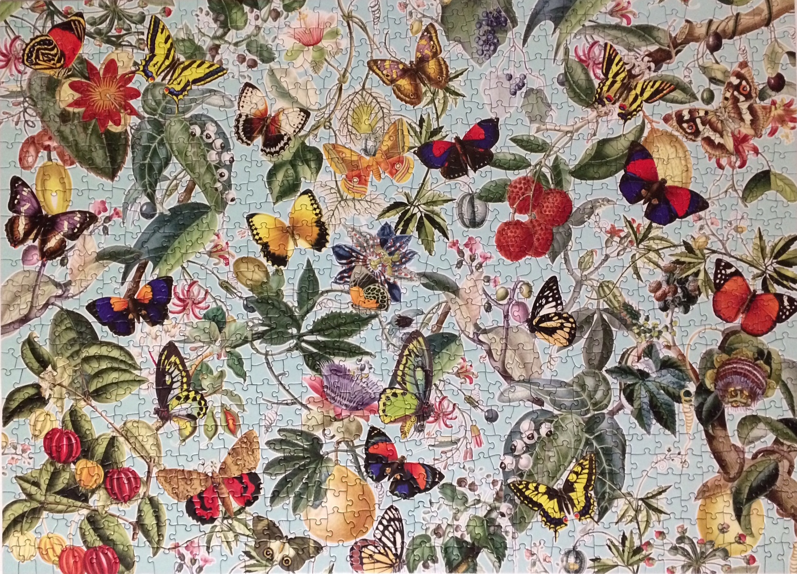 Brand: Cobble Hills Puzzle Company Title: Fruits and Flutterbies puzzle  Artist: Barbara Behr Pieces: 1000 Size:  48.9 x 67.6cm or 19.25 x 26.625″